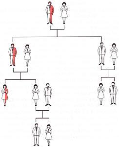 Schema genetico